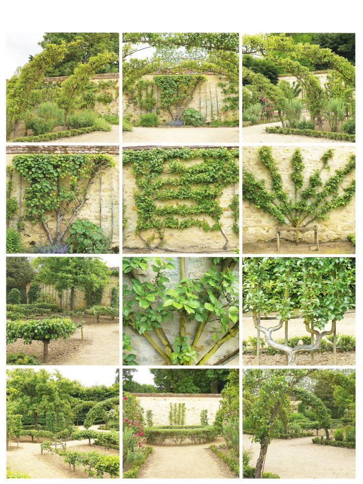 les 70 meilleures images du tableau arbres paliss s en espalier ou rideau sur pinterest. Black Bedroom Furniture Sets. Home Design Ideas