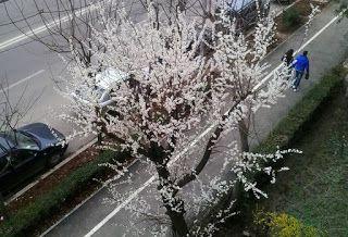 Femlora: primăvara