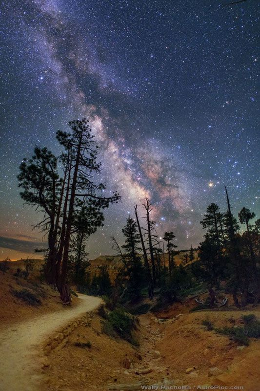 Bryce Canyon - Hiking Queen Trail in Trees under Milky Way