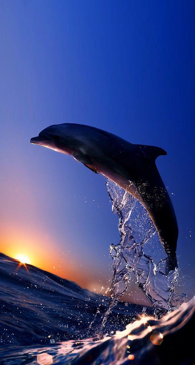 44 besten delphin flipper co bilder auf pinterest. Black Bedroom Furniture Sets. Home Design Ideas
