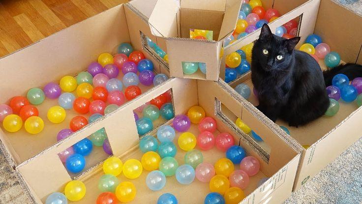 Deluxe Cat Ball Pit! – Youtube – Katzen