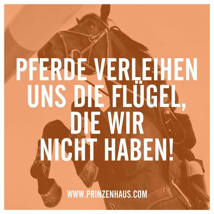 www.prinzenhaus.com Pferde verleihen uns die Flügel die wir nicht haben!