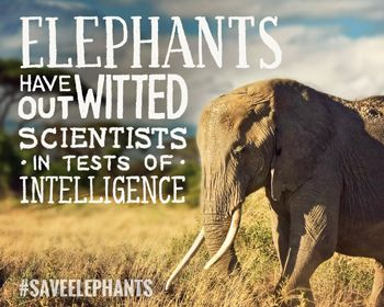 Elephants have outsmarted all of us - even Scientists! #SaveElephants
