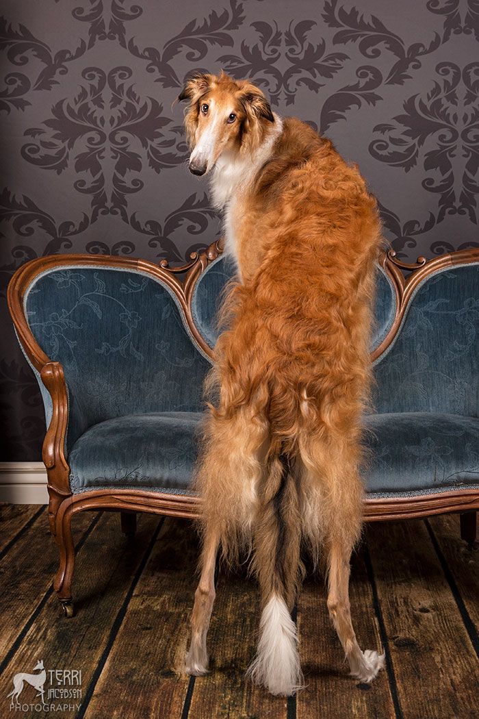 les 825 meilleures images du tableau chiens dogs cani sur pinterest animaux animaux de. Black Bedroom Furniture Sets. Home Design Ideas