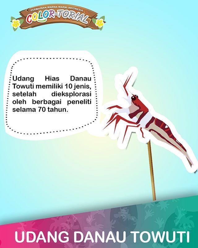 Udang hias Sulawesi jadi buruan aquarist di Eropa dan Amerika Utara. Habitat aslinya ada di Danau Malili, Sulawesi Selatan.  #EMCOLUX #COLORtorial #catkayubesi #warna #ngecat #surabaya #jakarta #depok #tangerang #bogor #bekasi #bandung #bali #banyuwangi #denpasar #jember #jogja #semarang #solo #kediri #mataram #nusatenggara #lombok #purwokerto #padang #makassar #cirebon #kupang #malang @indonesianrepost @indonesia_kaya @indotravellers @exploresurabaya