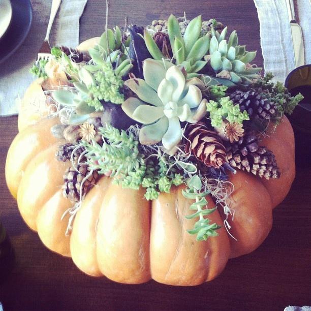 Succulent pumpkin! Perfect for Fall #DIHWorkshop