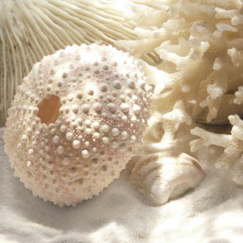 : Coral Shells, Sea Shells, Guest Bathroom, Beaches Rooms, Art Prints, Sea Urchins, Art Com, Beaches Themed, Donna Geissler