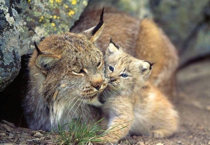 Magnifique chat sauvage