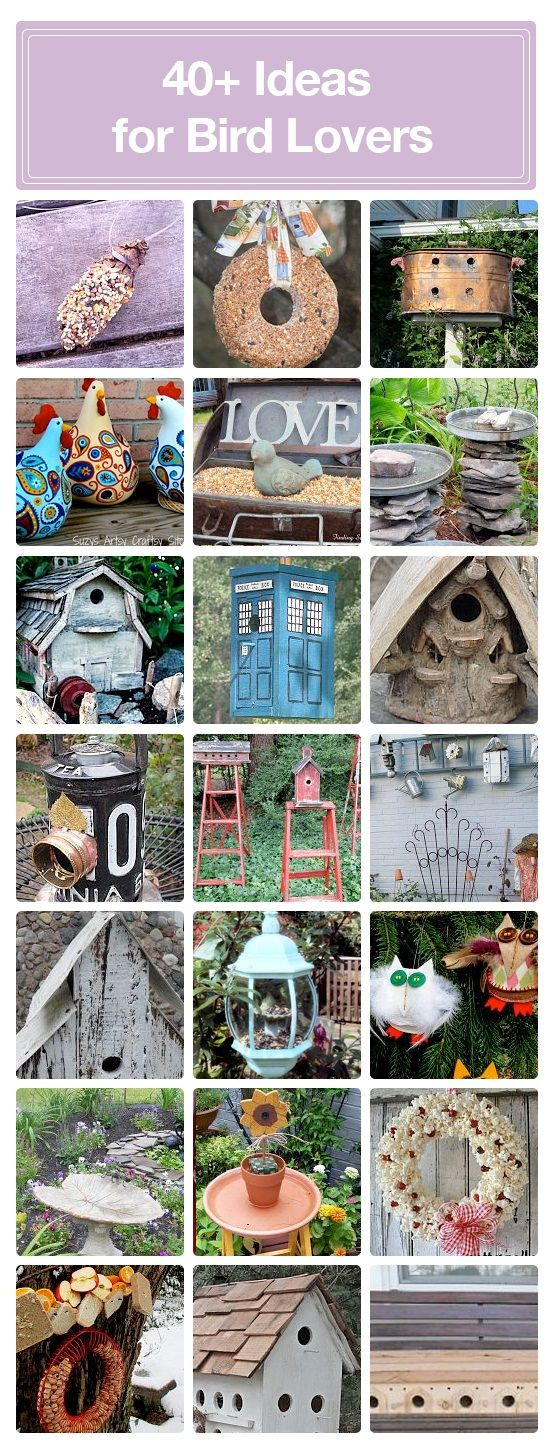 40 + ideas for attracting, feeding, and entertaining birds in your garden.