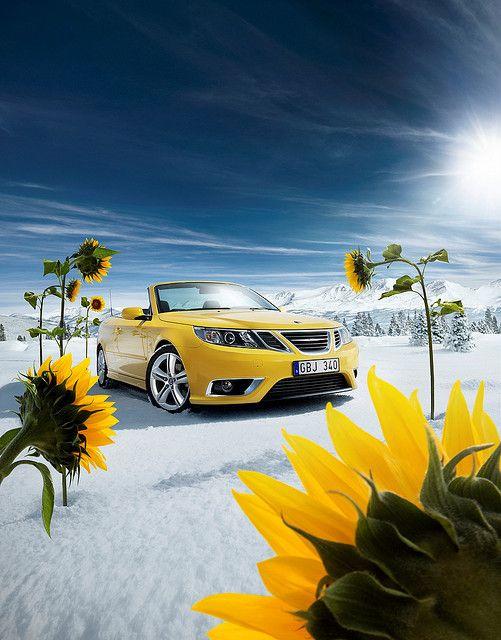 2008  Saab 9-3 Cabrio sunflowers