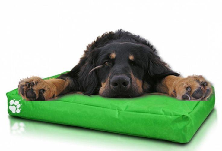 Unsere #Hundebetten bieten Ihrem #Hund einen bequemen und gemütlichen Platz zur #Erholung. Die hochwertige Füllung und der robuste Stoffbezug sorgen für die Strapazierfähigkeit und Langlebigkeit des Bettes. Der ausziehbare Bezug is sehr pflegeleicht und lässt sich in der Wachmaschine waschen. Schenken Sie Ihrem Hund seinen eignen Platz zum #Schlafen und #Erholen.