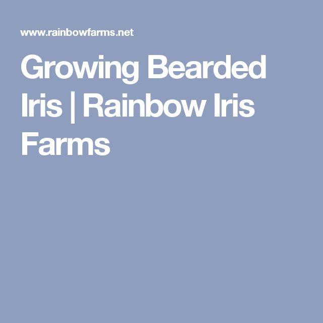 Growing Bearded Iris   Rainbow Iris Farms