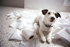 Housebreaking   Canine Advice, Tips and Tutorials   Dog Whisperer Cesar Millan