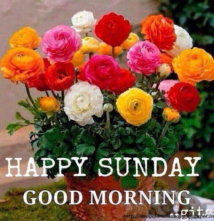 Good Morning Sunday Flowers Images : Best bitches images on pinterest curvey women curvy