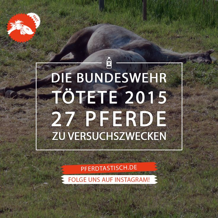 Mehr Fun & Fakten auf > pferdtastisch.de   #pferdtastisch #reiten #pferd #voltigieren #dressurreiten #springreiten #vielseitigkeitsreiten #geländereiten #jagdreiten #distanzreiten #orientierungsreiten #westernreiten #freizeitreiten #wanderreiten #formationsreiten #quadrillereiten #kunstreiten #pferderennen #reitsport #pony #tasthaare #tierschutz #bundeswehrtötet #tierversuche