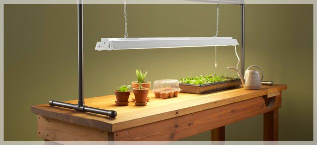 30 Best Images About Tomato Grow Lights On Pinterest 640 x 480