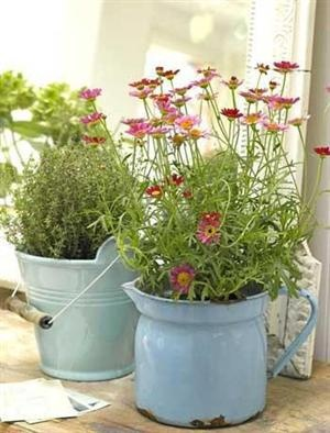 Flowers in enamelware pitcher and galvanized pail