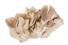 Hlíva ústřičná - houba, která vám prodlouží život