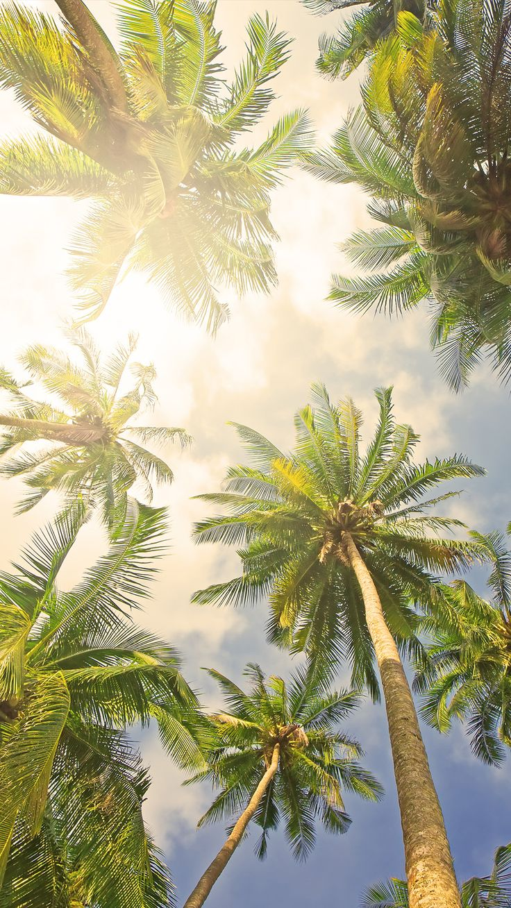 ↑↑TAP AND GET THE FREE APP! Art Creative Sky Sun Paradise Travel Vacation Palms Sun Holiday HD iPhone 6 Plus Wallpaper