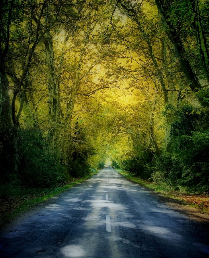 """500px / Photo """"autumn road"""" by Andy 58"""