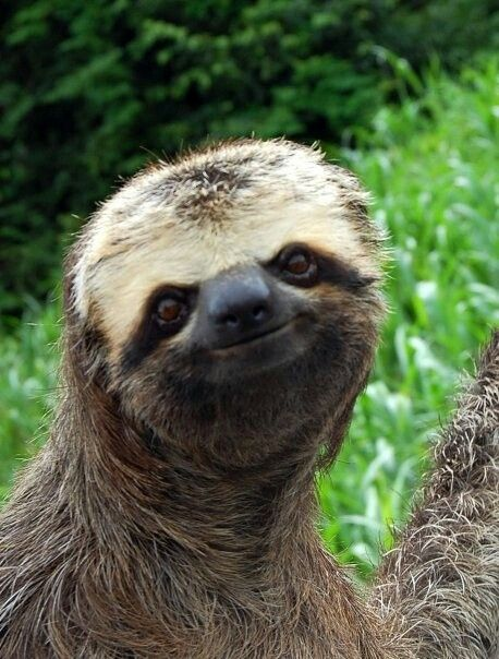 """The sloth's face is much more """"squished together"""" than humans; his nose, eyes, and mouth are all much closer together than in humans."""