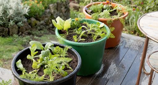 Organic food is growing in popularity - try growing your own for things you eat regularly like salad greens and herbs. Create a mini organic patch in some large containers and maximise the natural goodness in your garden!