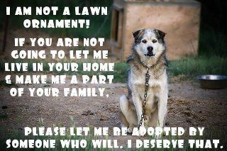 Don't chain up your dog!: Lawn Ornaments, Dogs, Pet Peeves, Sotrue, Chains, So True, Families, True Stories, So Sad