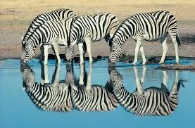 Image result for wild animals in south africa