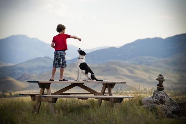 Pet Sitting Jobs for Kids