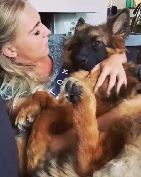 Baby German Shepherd 🥰