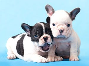 Adopt a dog: Cesar Milan's tips on adoption