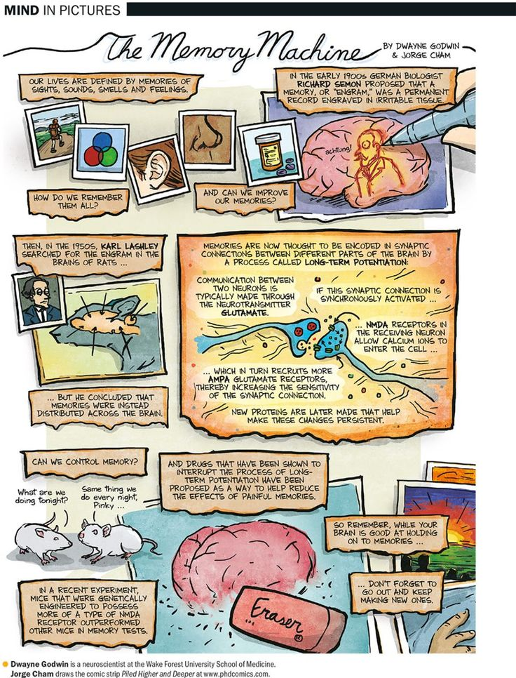 How the Brain Makes Memories - Scientific American  What new memories will you make today?