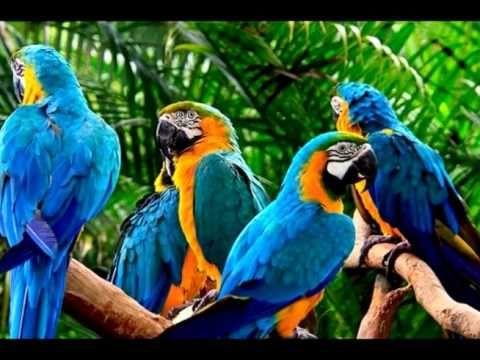 Las aves con cerebro más grande sufren menos de estrés.