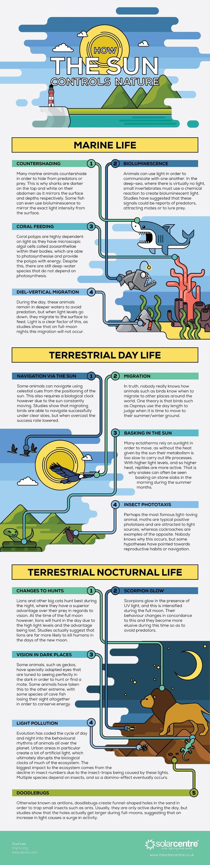 How the Sun Controls Nature #Infographic