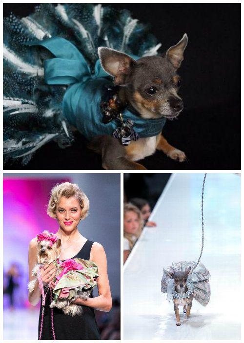 Moda Canina - Vestidos