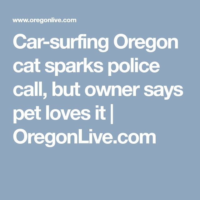 Car-surfing Oregon cat sparks police call, but owner says pet loves it | 						OregonLive.com