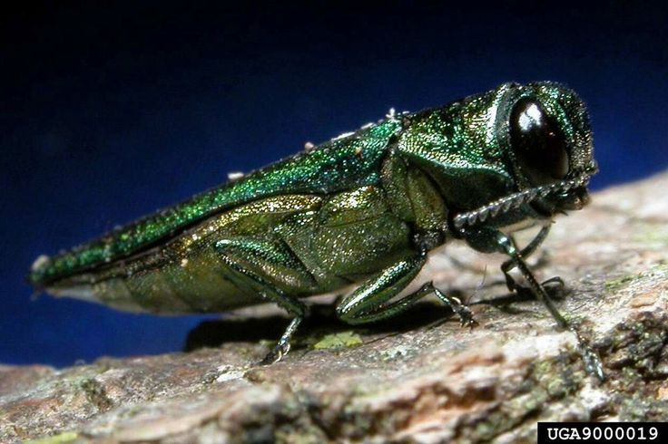 Have you heard of this monster? That's no glammed up grasshopper.This nightmare and family are responsible for decimating hundreds of millions...that's&nb…