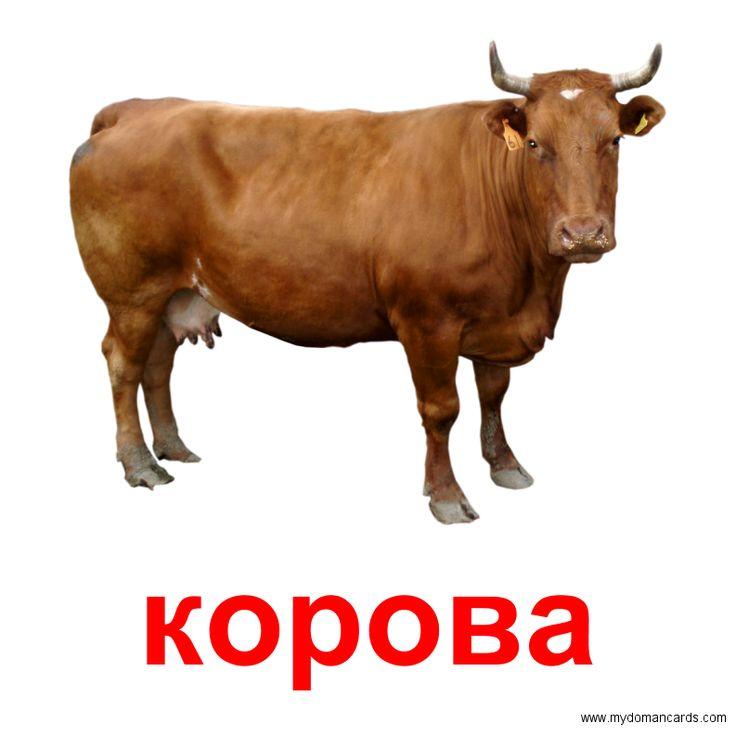 Корова -  Бесплатная Карточка Домана