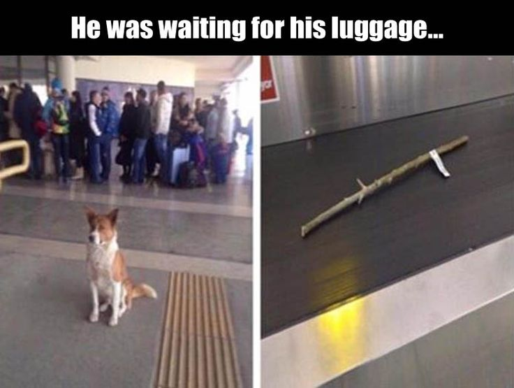 Funny Pictures Of The Day – 36 Pics