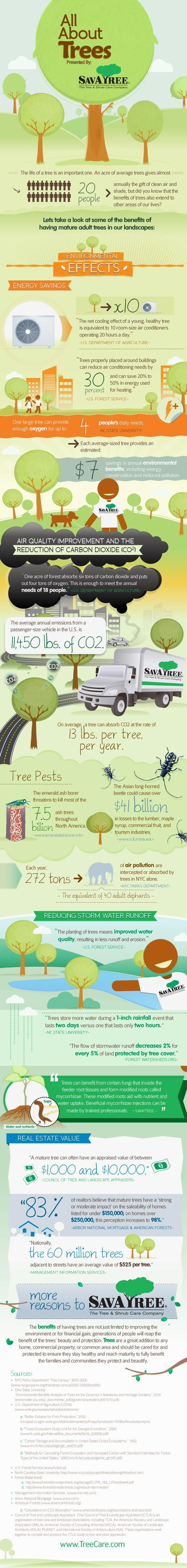 One Big Tree = Oxygen for Four Humans