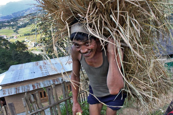 Carrying a heavy load of forage for livestock, near Nagarkot, Nepal: Daily Photo