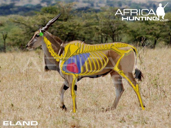 where to shoot a eland