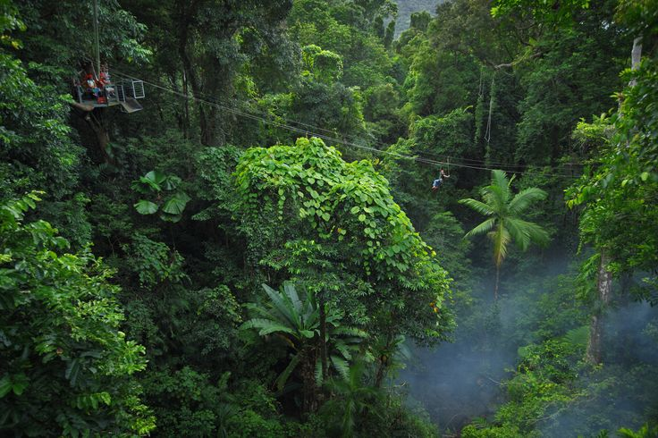 Imagine gliding through the rainforest canopy...