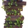 Faire pousser des graines de lentilles, de radis, de salades .. dans des vieux livres