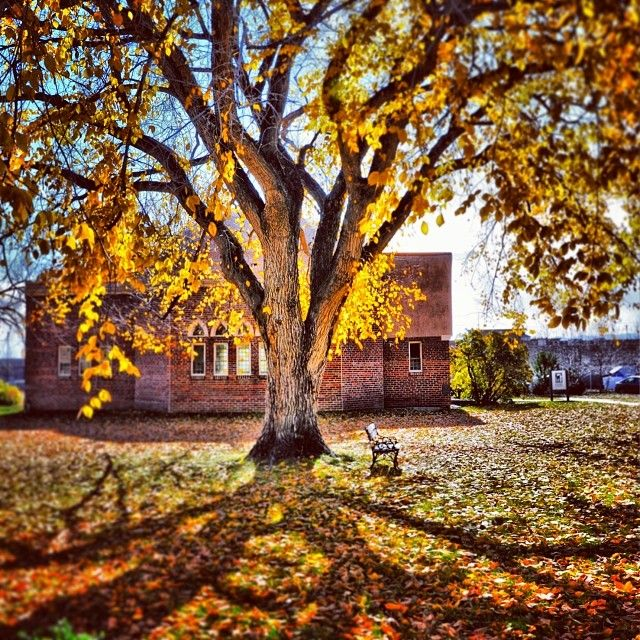 Colorado Mountain College: 367 Best Campus Images On Pinterest