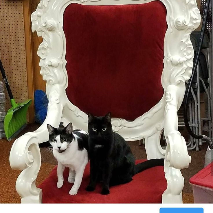 Our adorable little mascots Oreo and Wolfie are ready for Christmas in July waiting for Santa in his special chair from #midtownplaza #roc #santa #christmas  Merry Christmas and Happy Holidays to all of you from Oreo Wolfie and all of us here at Arlene's Costumes!  Contact us at 585-482-8780 for more information on our famous chair or check out select costumes and accessories on our website www.arlenescostumes.com