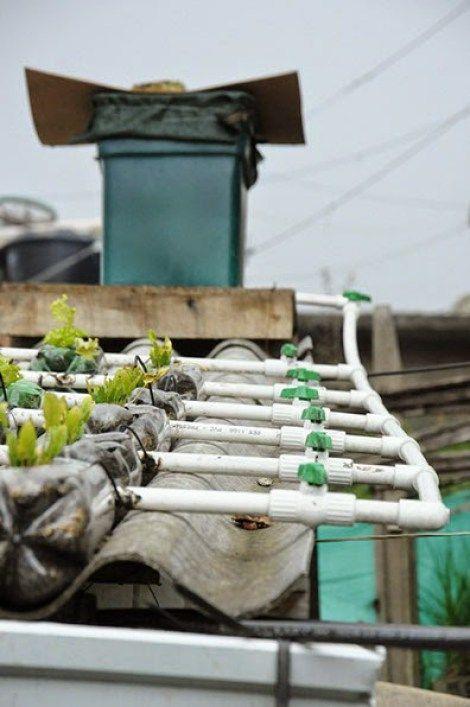 Un proyecto que pretende convertir las azoteas de las casas humildes en efectivos huertos urbanos. #techosverdes