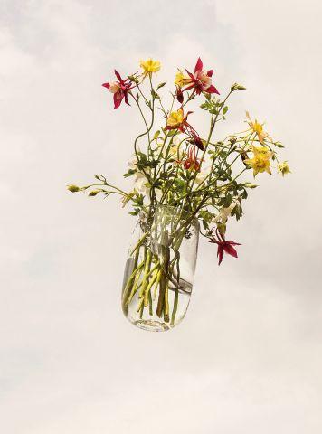 Sie ist keinem Ort treu, sonnt sich auf Wiesen: Die Akelei gehört zu den wilden Blumen des neuen Gärtnerns – und hat dabei eine spannende Geschichte.