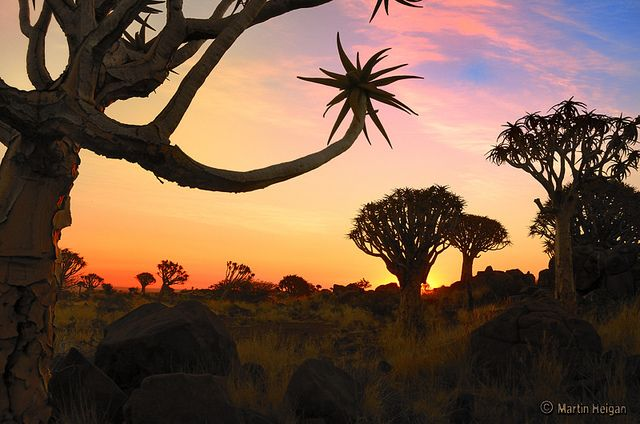 Quiver Tree Forest Sunset by Martin_Heigan, via Flickr