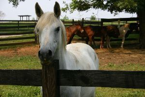 No BS! Free HS! – Getting Horse Manure for your Garden | Walter Reeves: The Georgia Gardener